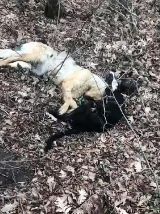 Под Новороссийском в посадках найдены трупы собак