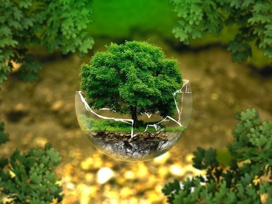В регионе уменьшилось количество экологических преступлений