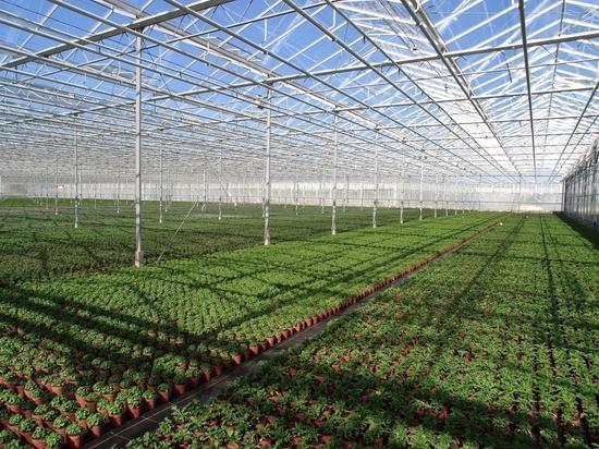 Инновационную теплицу для экоовощей построят в Тверской области