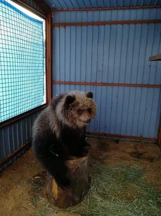 Медведица Машка впервые отметит свой День рождения в Калуге