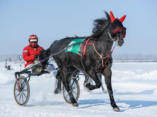 И рысаки, и рабочие лошадки: конноспортивный праздник на «Сибирской масленице»!