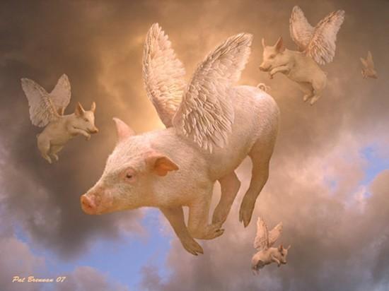 Крайне неудачно начался Год свиньи для одиннадцати плесецких поросюшек