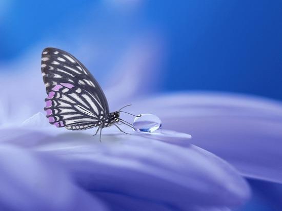 40 процентам видов насекомых угрожает вымирание, показало исследование