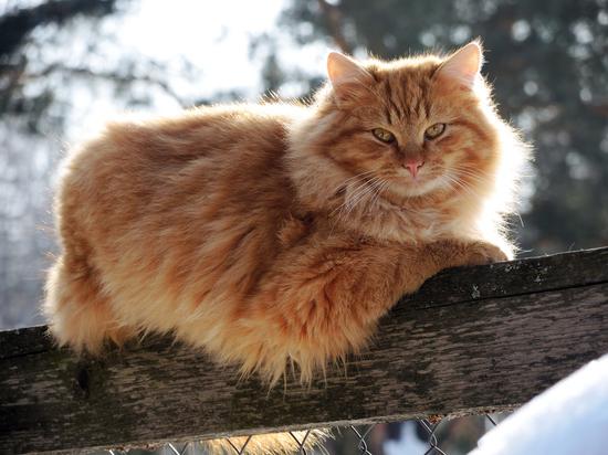 Разъяренный кот покусал фельдшера, приехавшего к больному в Москве