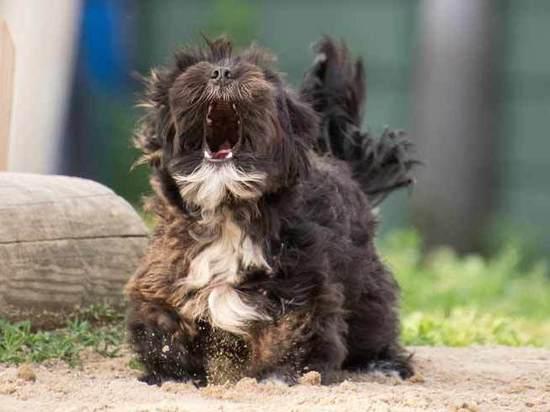 Хозяева шумных псов в городке Фекьер заплатят 68 евро за «эпизод»