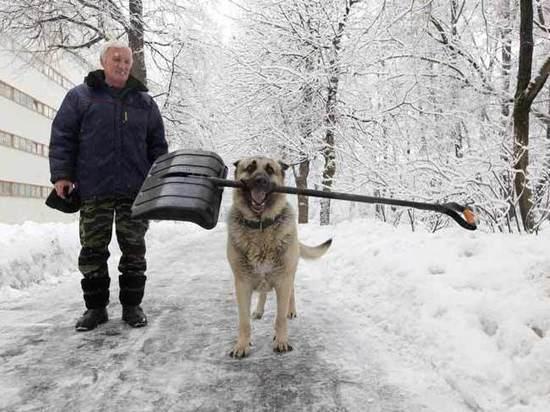 Снежный катаклизм в Москве: погода побила очередной рекорд