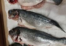 На Смоленщину не пропустили 38 тонн рыбы