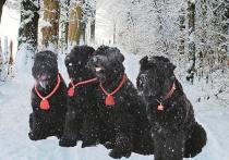 Российские собаки, покорившие мир: непризнанные породы для активных людей