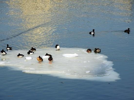 Суббота стала самым теплым днем зимы в Москве за 70 лет