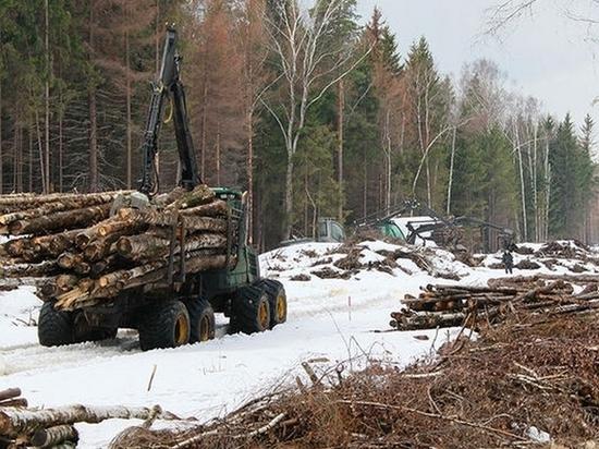 В заповедниках Хабаровского края ведутся промышленные рубки