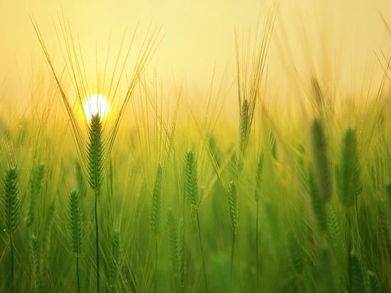 Вклад в благополучие родной земли