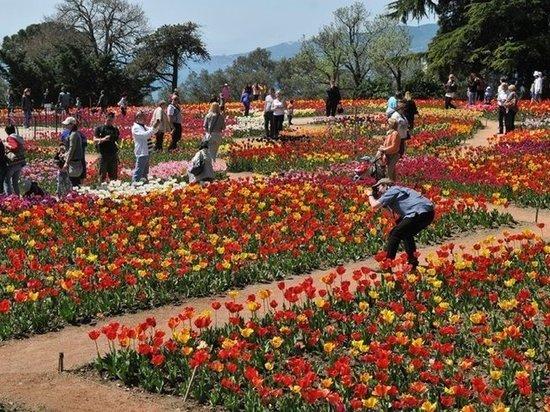 Весной в Никитском ботсаду расцветут 100 тысяч тюльпанов