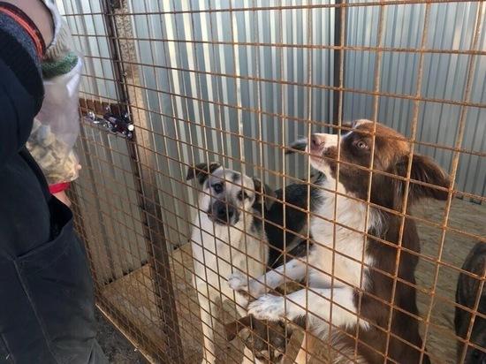 Жизнь собачья. Кто и как в Рязани помогает бездомным животным