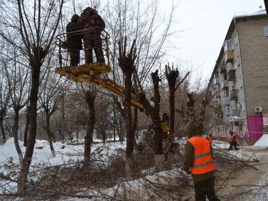 Двести деревьев в Иваново приобретут новую форму кроны