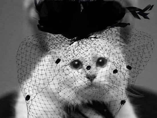 Кошка умершего кутюрье Лагерфельда