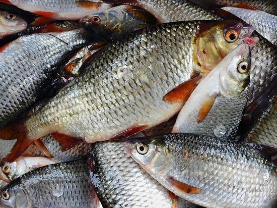 Отказ от «исторического принципа» выдачи квот грозит крахом рыбной отрасли России