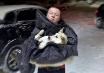 Ярославец спас бездомную собаку, попавшую в ДТП