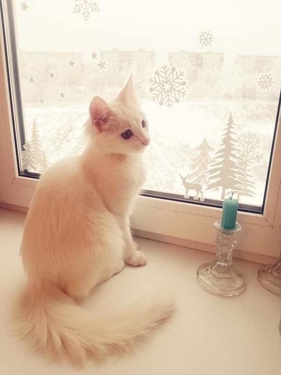 В Смоленске можно бесплатно привить домашних животных от бешенства