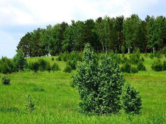 Красноярский край получит больше миллиарда рублей на охрану лесов