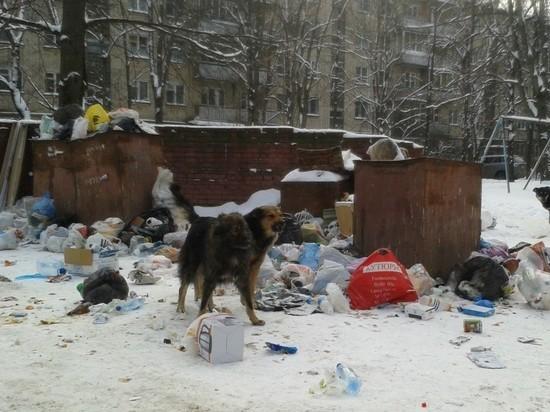 Жители Подгородней Покровки жалуются на собак и мусор
