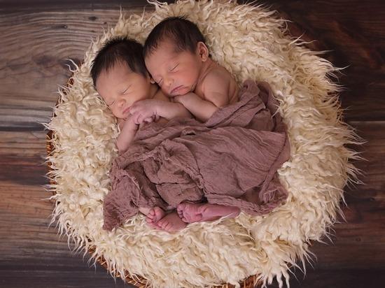 Уникальные близнецы-«химеры» родились в Австралии