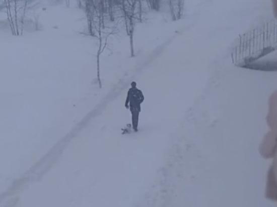 В Надыме ищут подростка, который издевался над псом во время прогулки