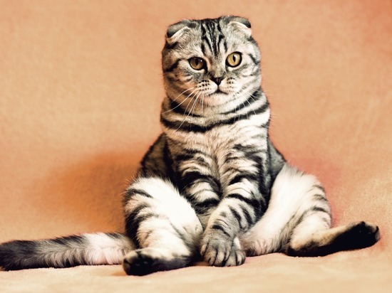 День кошки: правда и мифы о «мистическом» животном