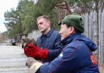 «Свободу канюкам!» На Куршской косе выпустили диких птиц на волю