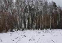Босоногая тропа появится недалеко от Москвы