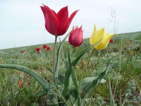 В Калмыкии обсуждают проведение Недели туризма