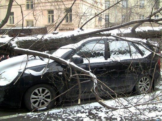 Московских водителей призвали не парковать машины у деревьев из-за непогоды
