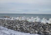 """Журнал """"Сайенс"""" сообщает, что за 80 лет мировой улов рыбы сократился на 4,1 процента"""