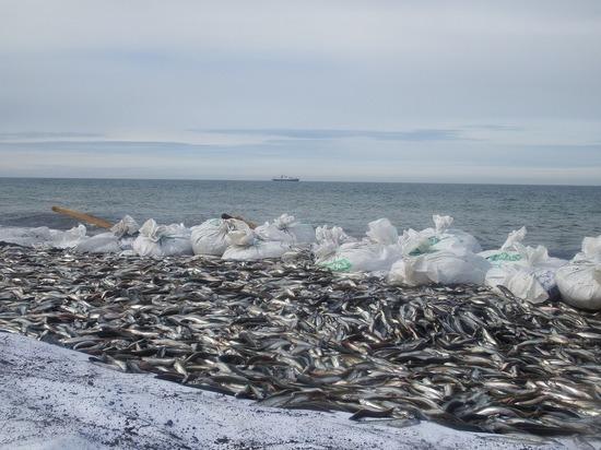 Рыба исчезает: скоро океан перестанет быть кормильцем человечества