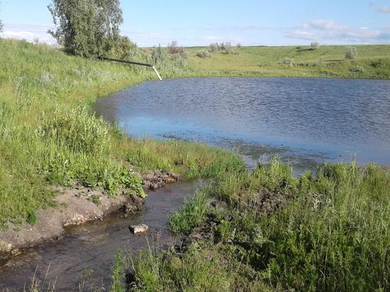 В Ульяновской области собираются заняться рыборазведением