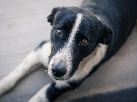 Петиция с требованием не убивать собак в Чите почти набрала голоса