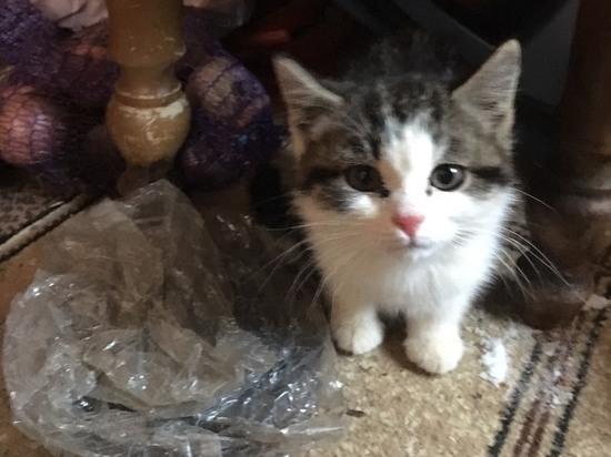 В Ноябрьске при переезде из расселенного дома жители бросили котят