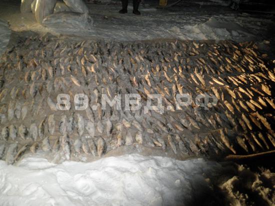 На Ямале молодой браконьер наловил рыбы почти на 1,5 млн рублей