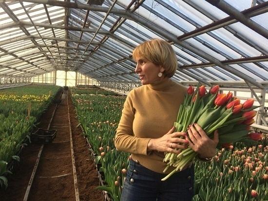Как выращивают цветы к 8 Марта в Южно-Сахалинске