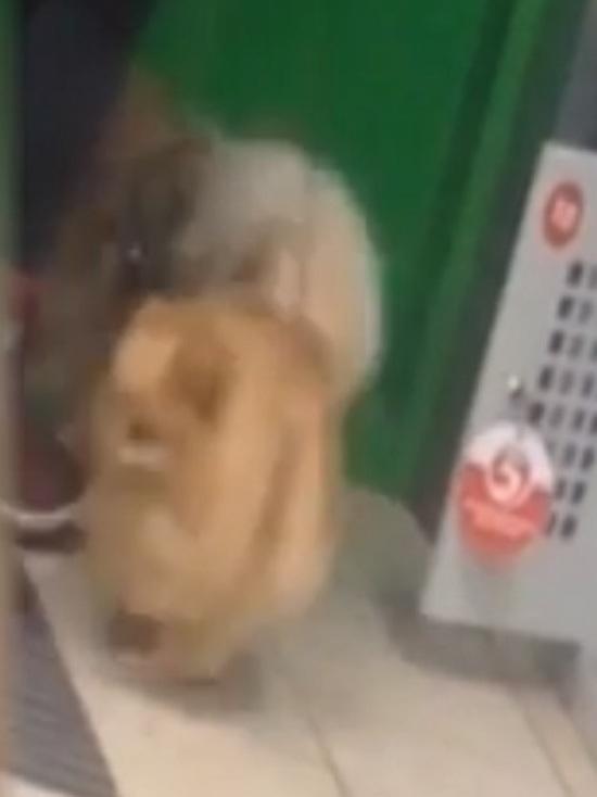Дама сдавала в багаж: в Рыбинске женщина засунула трех шпицев в ячейку хранения