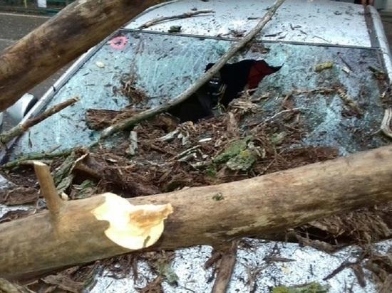 Управляющая компания в Калмыкии заплатит автовладельцам за упавшее дерево