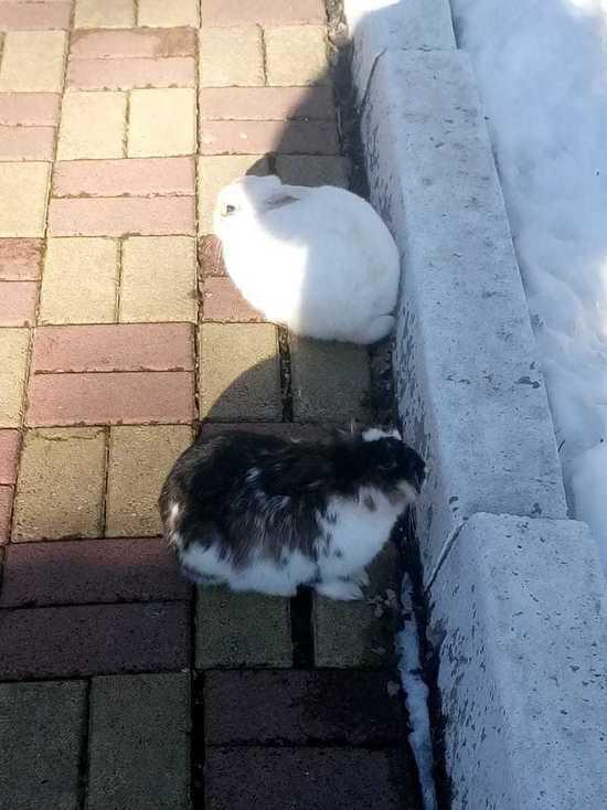 Кролики помогли осужденному сбежать из калужской колонии