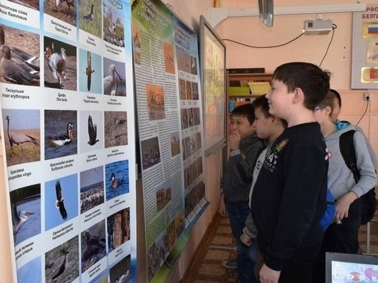 Сельские школьники Калмыкии посетили виртуальные заповедные уроки