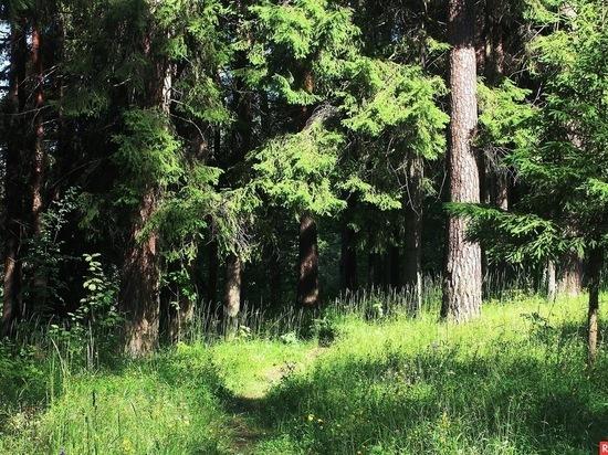 60 соток ивановского леса вернули государству сотрудники прокуратуры