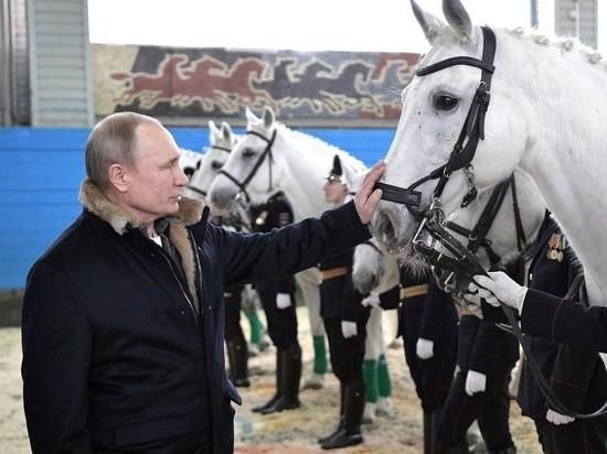 Строптивый конь повез Путина задом наперед, но президент его укротил