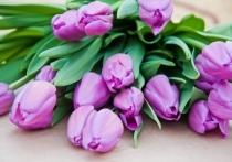 Популярные волгоградцы поздравили прекрасную половину с 8 Марта