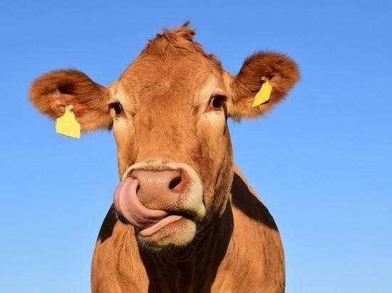 Псковская область заняла 28 место в России по производству молока