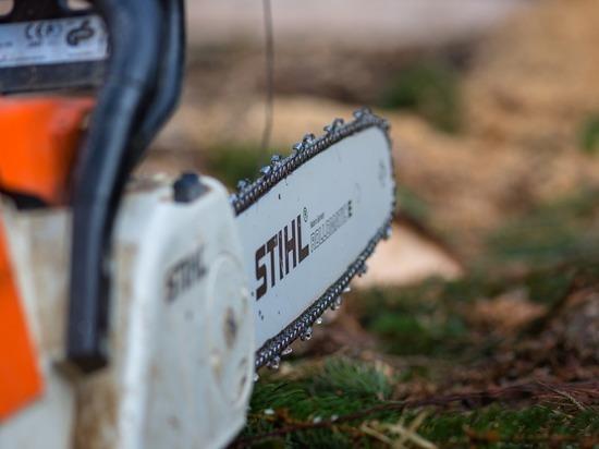 «Нет ничего лучше бензопилы»: как волгоградцам избавляться от конкурентов