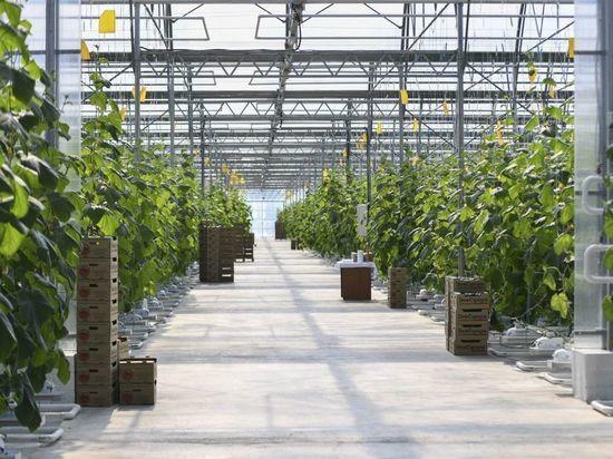 Студентов агроуниверситета в Северной Осетии привлекут к садоводству