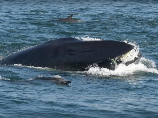 Попытка кита скушать дайвера попала на видео