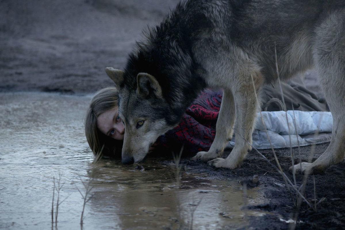 Фильмы в картинках волк